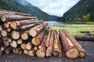 Raw MySQL Query Logs
