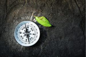 MongoDB Compass