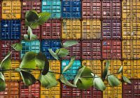 mongodb in docker containers